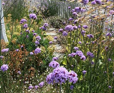 Garden Designer Snodland Kent