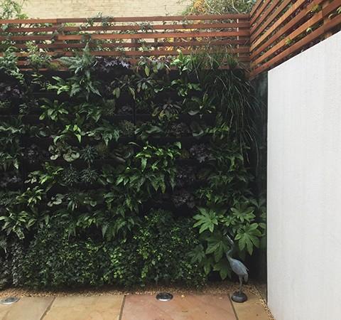 Living Wall Chiswick London Garden Designer Elemental