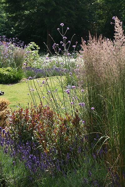 Classic garden design london garden designer elemental for Hardy perennial ornamental grasses