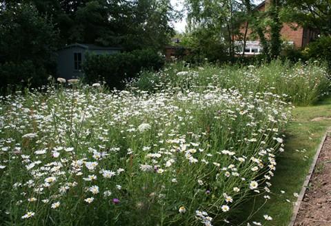 garden design shipley west sussex