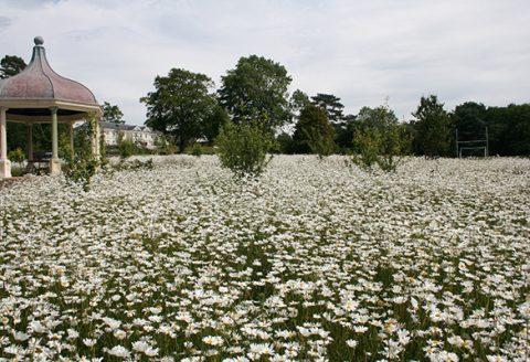 wildflower seeding