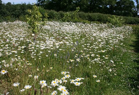 wildflower turf wimbledon