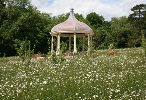 wildflower seed garden