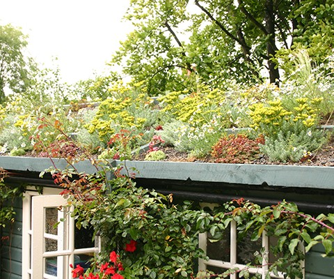 Mixed succulent and wildflower roof planting