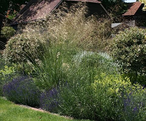 contemporary garden, oat grass and lavender hidcote