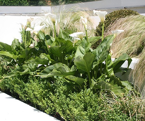 contemporary green and white planting