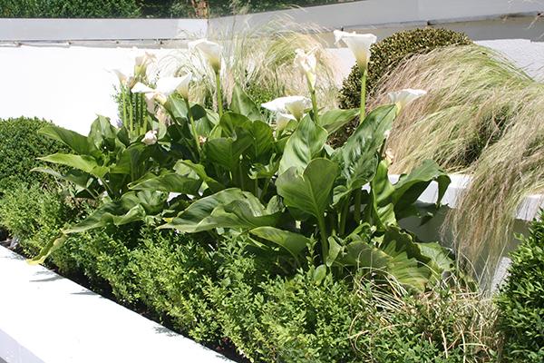 Contemporary Garden Design In Wimbledon London Sw19