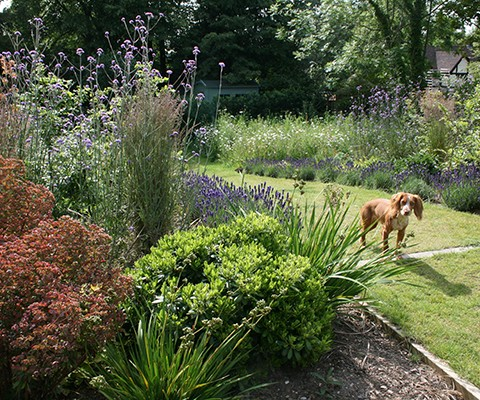 cottage garden, mixed herbaceous perennials with lavender border edge