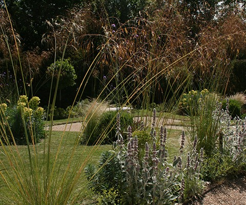 drought tolerant planting, herbaceous perennials