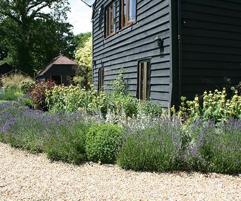 garden border edging, cottage garden plants, lavender hidcote