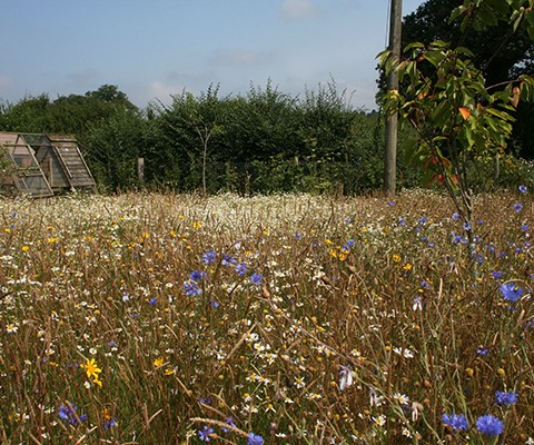 garden design sussex, wildflower meadow seed mix