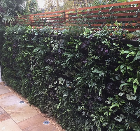 green wall systems, wall planter, shade planting