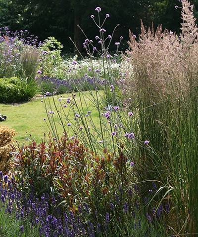 hardy perennial plants and grasses