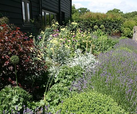 herbaceous perennials, country garden lavender and box border edging