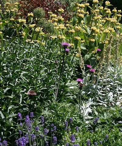 herbaceous perennials, english garden