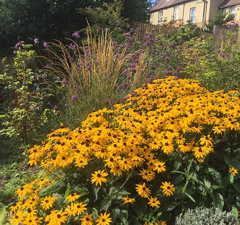 late flowering perennials, hardy herbaceous plants