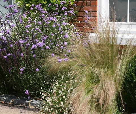 long flowering perennials, front garden edging plants