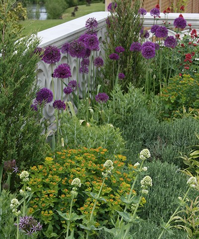mixed late spring herbaceous border with structure shrubs