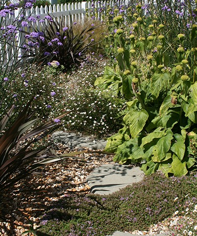 mixed perennials and ground cover planting