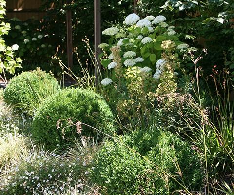 mixed shrub and herbaceous perennials