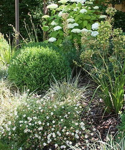 mixed shrub and herbaceous planting