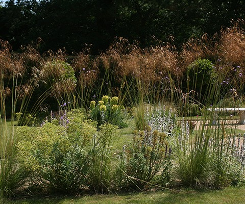 oat grasses as perennial border plants