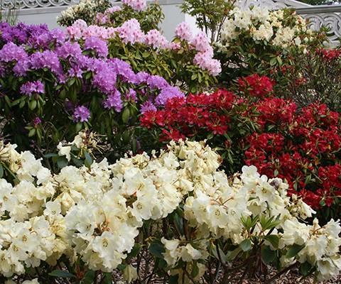 Classic Garden Design Tonbridge Kent Garden Designer