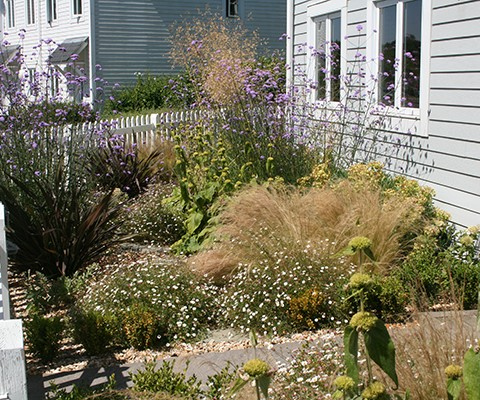 small garden ideas, drought tolerant planting