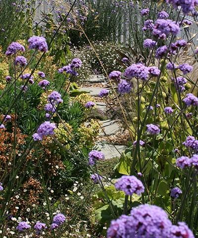 small garden ideas, front garden stepping stones