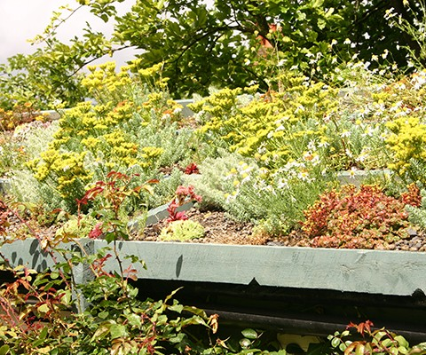 succulents and perennials on a small roof garden