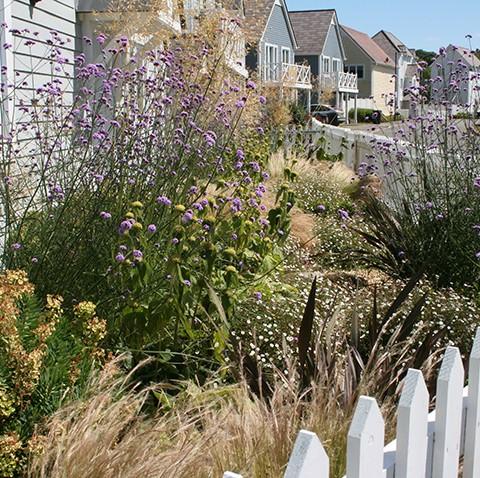 sunny small garden planting