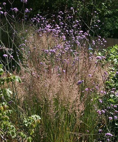 verbena and grasses