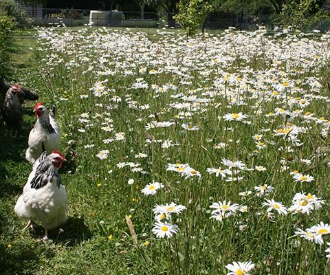wildflower meadow produced by wildflower seed