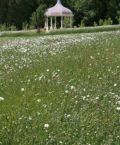 wildflower meadow using wildflower seed